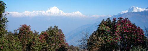 Ghorepani/Poonhill Trekking