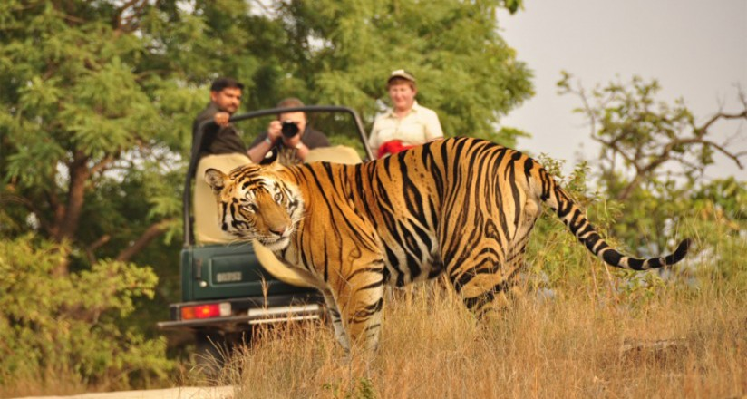 Jungle Safari Experience in Nepal